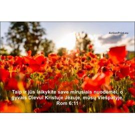 Magnetukas Biblijos eilutė - Romiečiams 6:11