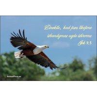 Magnetukas Biblijos eilutė - Jokūbo 1:3