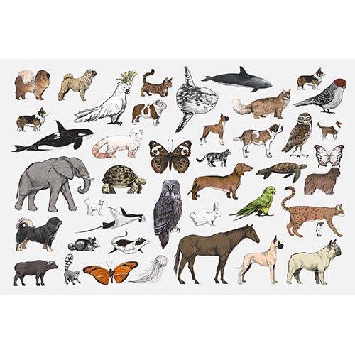 Plakatas mokomasis Gyvūnai