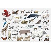 Plakatas mokomasis Gyvūnai 0002