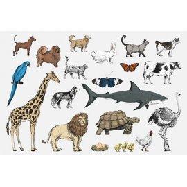 Plakatas mokomasis Gyvūnai 0003
