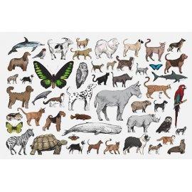 Plakatas mokomasis Gyvūnai 0004