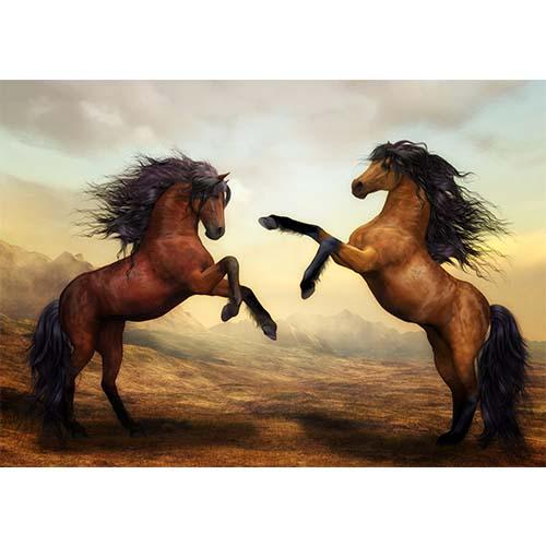Plakatas Žirgai