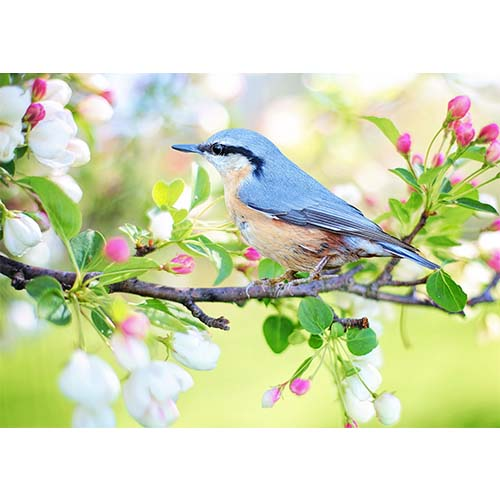Plakatas Pavasarinis paukštis