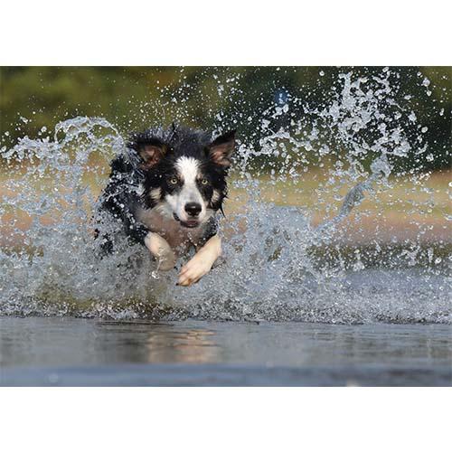 Plakatas Bėgantis šuo