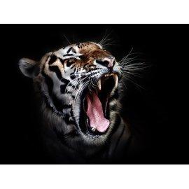 Plakatas Tiger