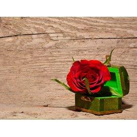 Plakatas Rožė 005