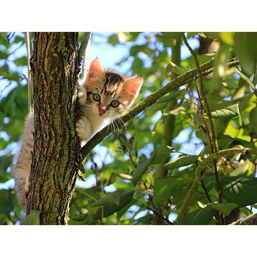 Plakatas Kačiukas