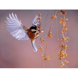 Plakatas Paukštis