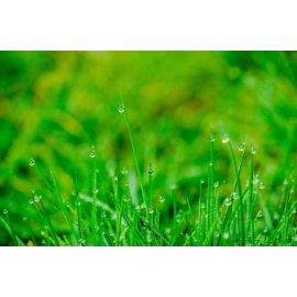 Fototapetas Žaliuojanti pieva saulės glėbyje - 004
