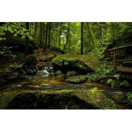 Fototapetas Žalioji laukymė miško glūdumoje