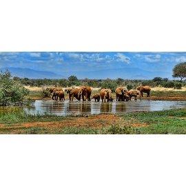 Fototapetas Geriantys iš tvenkinio drambliai