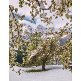 Fototapetai Kalnų medžių peizažas