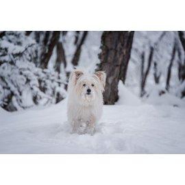 Fototapetai Šuo besidžiaugiantis žiemos sniegu
