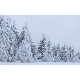 Fototapetai Apsnigti miško medžiai