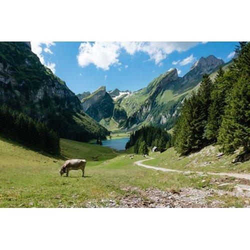 Fototapetai Kalnų takas lydintis link ežero