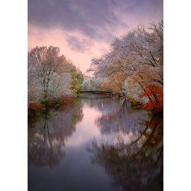 Fototapetai Medžiai apsupantis upę