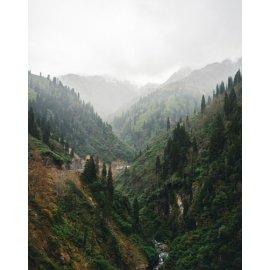 Fototapetai Kalnų tarpeklių miškai