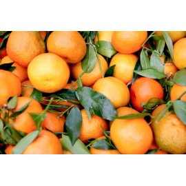 Fototapetai Nuskinti apelsinai