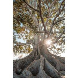 Fototapetai Medis apsuptas saulės spinduliais