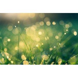 Fototapetai Rasos lašai ant žolės