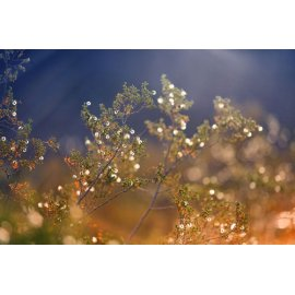 Fototapetai Medžio šakos