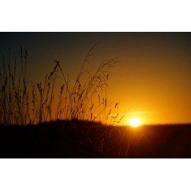 Fototapetai Žolės siluetas