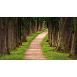 Fototapetai Takas tarp medžių