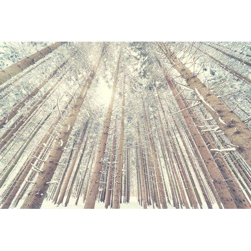 Fototapetai Žiemos miško medžiai