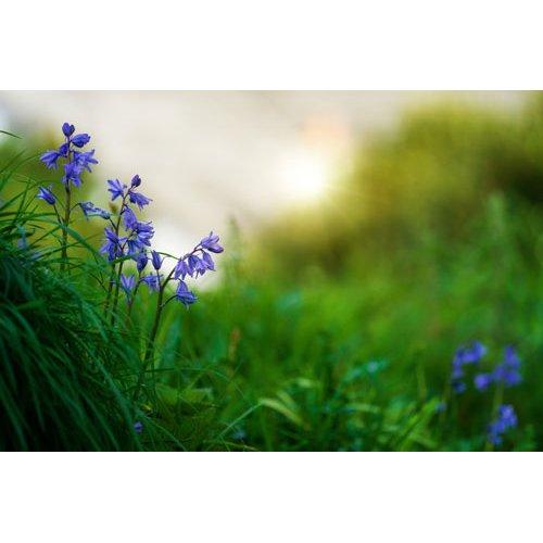 Fototapetai Mažos pavasario gėlės