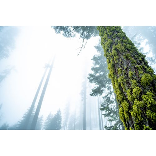 Fototapetai Reta medžių giraitė