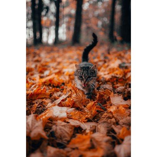 Fototapetai Katė einanti per rudenio lapus